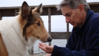 Saphire, a collie, eating out Jeffrey Berger's hand