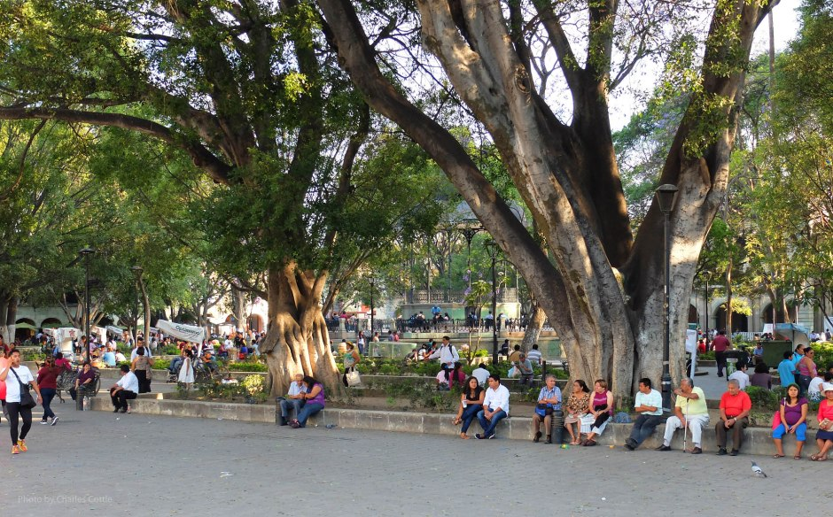 The city square or zócalo with people sitting and covered by large shade trees.