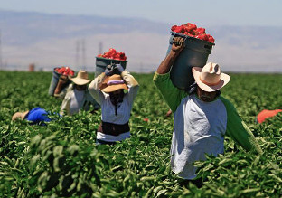 agricultural-workers-national-review-picture