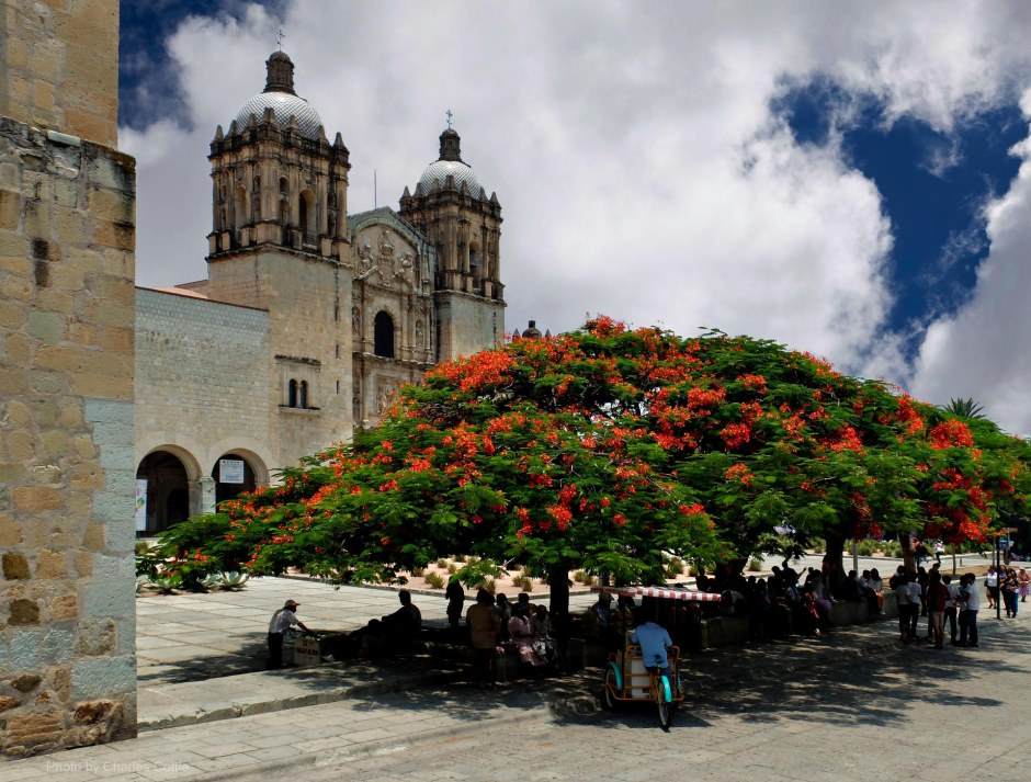 Flamboyant tree with orange blossoms in front of Santo Domingo church.